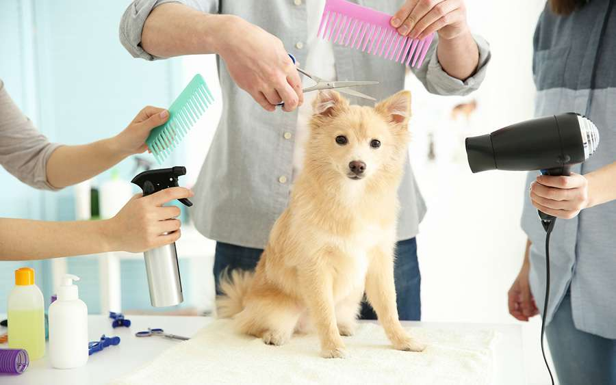 Dog Grooming Is Challenging But The Rewards Are Priceless