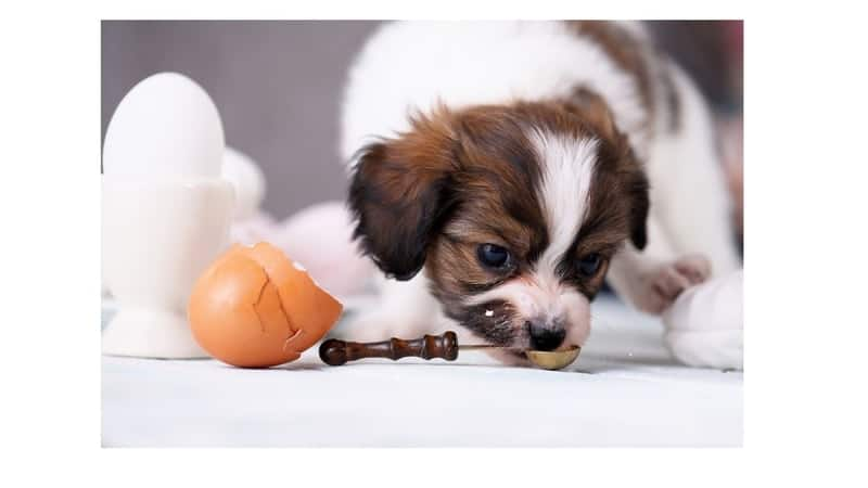 dogs eat egg shells