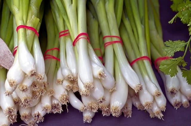 a picture of a green onion