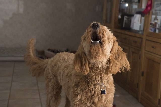 dog aggression towards owner