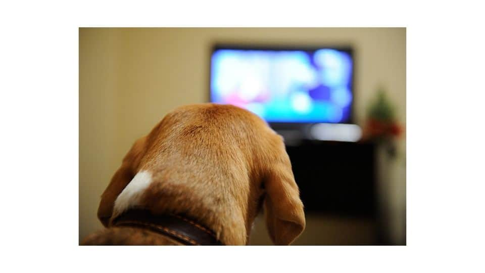 leaving lights and tv on for dog