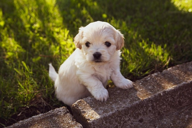 can you sell 8 weeks puppies