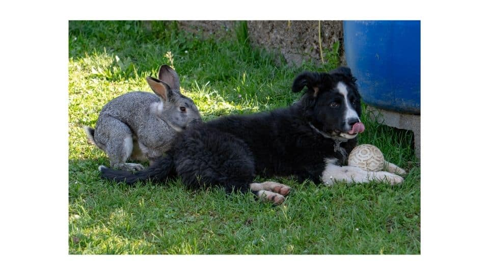 can dog and a bunny get along