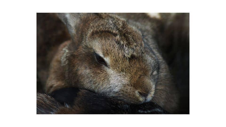 do bunnies